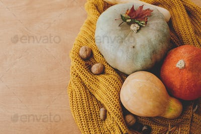 Pumpkins, harvest vegetables and autumn flowers on cozy knitted sweater
