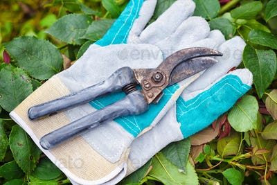 Garden gloves with secateurs for working in the garden