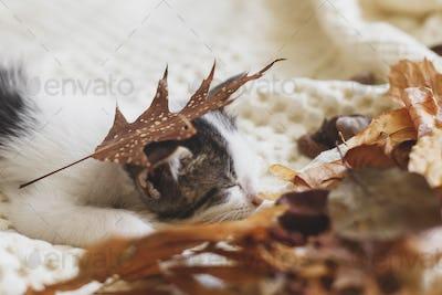 Adorable kitten sleeping in autumn leaves on soft blanket