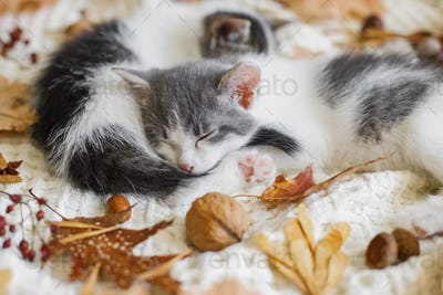 Two cute white and grey kittens sleeping together on cozy blanket