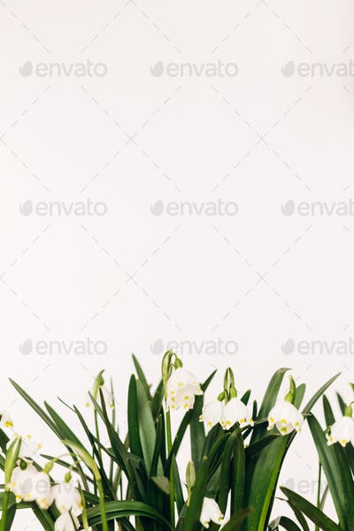 Spring flowers growing on white background with copy space