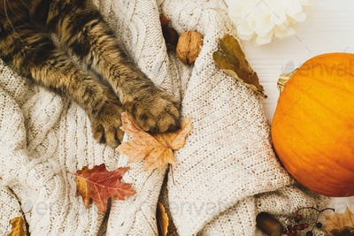 Cute tabby cat holding autumn leaves, relaxing on warm knitted sweater