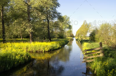 Canal in the Alblasserbos