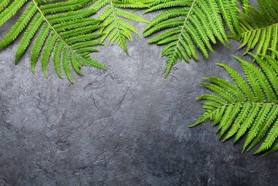Abstract nature background with fern leaves