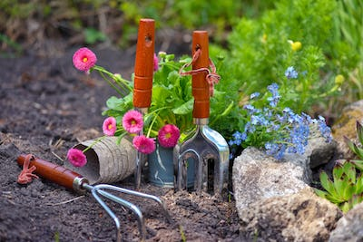 Gardening tools and spring flowers in the garden. Gardening concept.