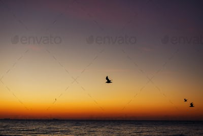 Beautiful view of seagulls flying in sky at sunrise in sea