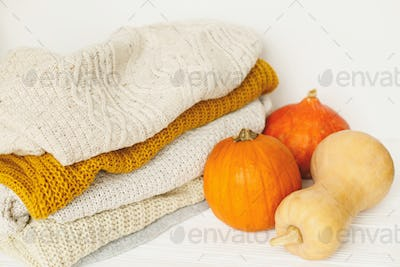 Cozy knitted sweaters and pumpkins on white background
