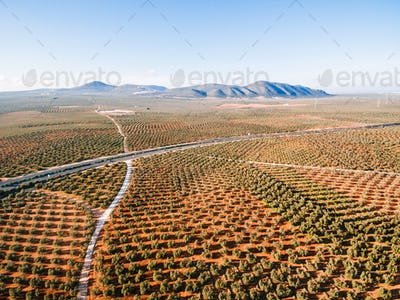 Landscape with olive fields, aerial view