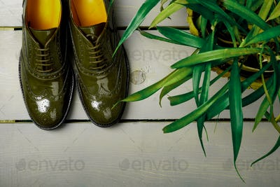 Green lacquered oxford shoes on wooden background near flower pot.