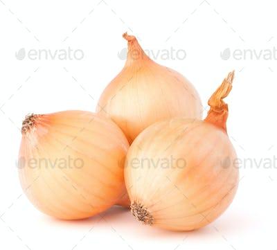 Onion vegetable bulbs