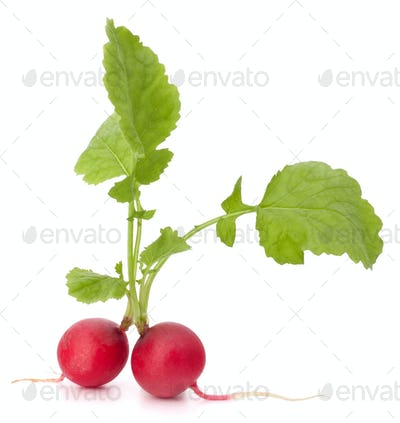 Small garden radish with leaves