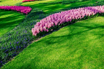 Flower-bed of spring flowers in the park