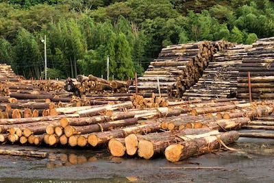 Landscape With Large Woodpile