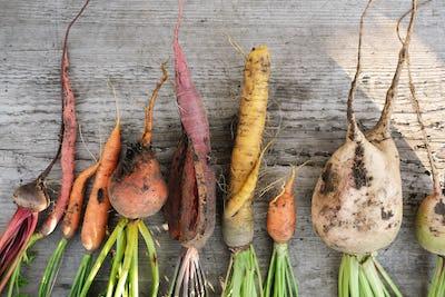 Ugly organic vegetables