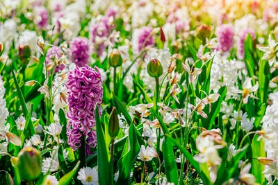 Flower flowerbeds in the park