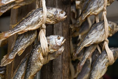 Dried salty fish hanging on the store
