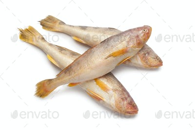 Fresh raw butterfishes