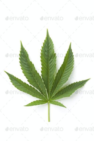 Single Marijuana leaf