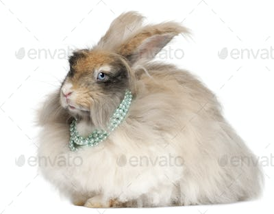English Angora rabbit wearing pearls in front of white background