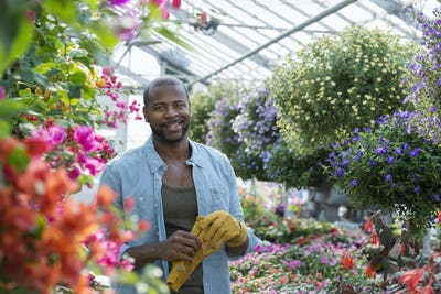 Man working, checking and tending flowers in a commercial greenhouse