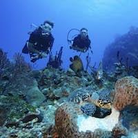 Divers watch interaction of different species of marine life underwater