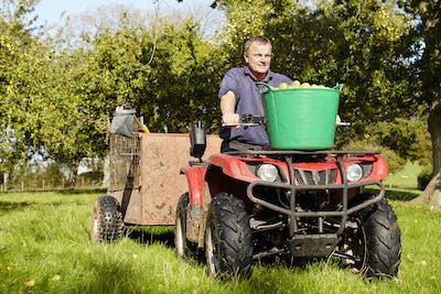 A man driving a quad bike and trailer, with tubs full of apples in an orchard.