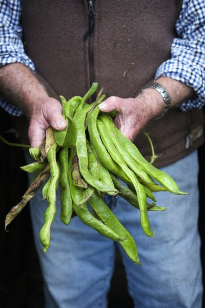 A man holding a handfull of long vivid green runner beans, fresh vegetables.