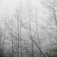 Woodlands in winter, bare trees in the mist, one tree trunk leaning at an angle.