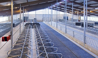 Row of Cattle Cubicles