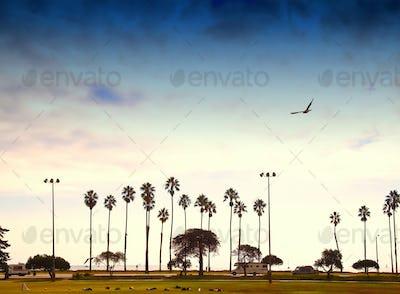 Palm Trees Lining the Beach