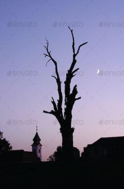 Silhouette Of Split Tree