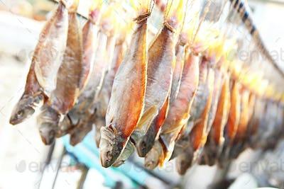 dry salt fish