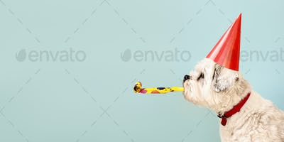 Dog celebrating with party hat
