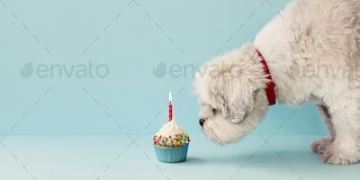 Dog with birthday cupcake