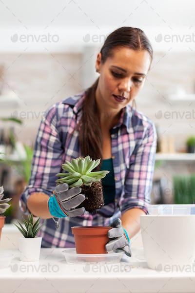 Holding succulent flower