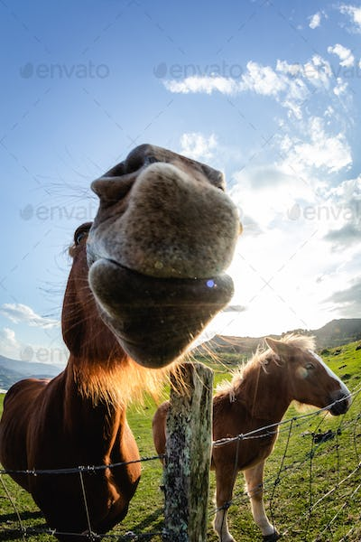 horses with funny and curious faces in freedom on the mountain