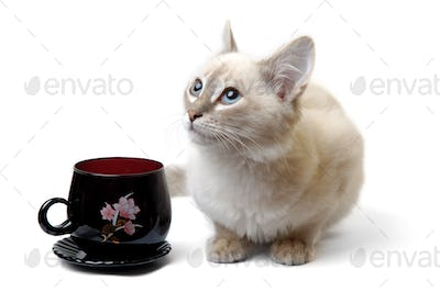 White cat with cup of tea