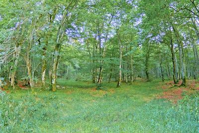 Forest Landscape, Valderejo Natural Park, Spain
