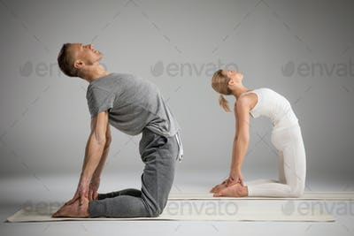 Couple practicing yoga standing in Ushtrasana position or Camel pose   isolated on grey