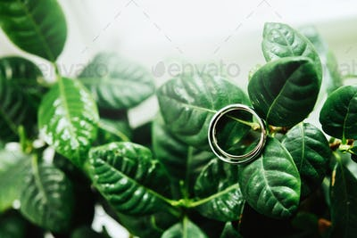 stylish wedding rings on beautiful fresh green leaves of a plant, love concept
