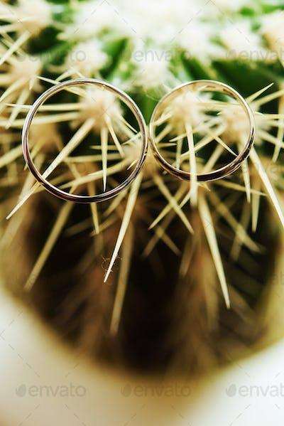 stylish wedding rings on beautiful fresh green cactus, love concept