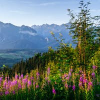 Wild flowers at sunset in the mountains. Poland