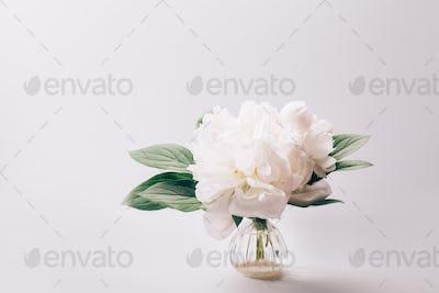 White Peony, simple elegance
