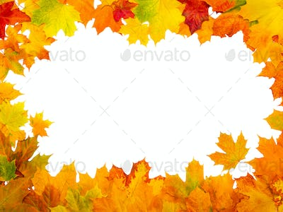 Maple autumn leaves frame on isolated white background