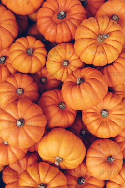 Many orange pumpkins. Halloween concept.