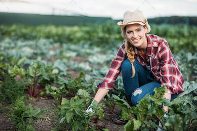young female farmer in hat harvesting beetroots and smiling at camera in field