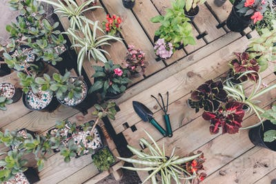top view of hand trowel and hand rake among arranged flowers and plants on wooden surface