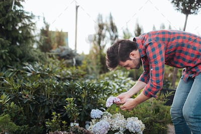 side view of gardener in casual clothing checking flowers in garden
