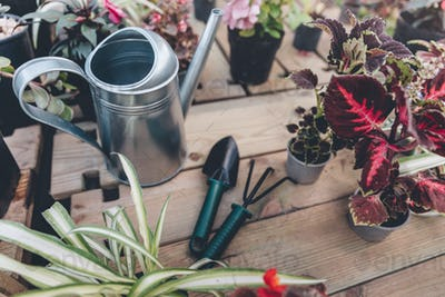 close up view of watering can, hand trowel, hand rake and arranged various plants on wooden surface