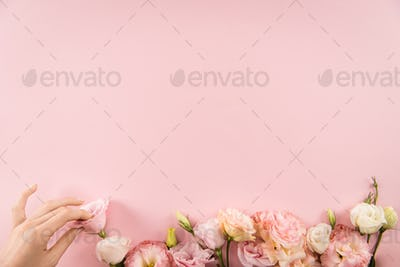 Top view of hand arranging beautiful tender flowers isolated on pink background